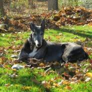 Greyhound Wellness