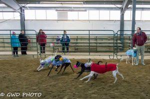 Romp & Roo Ancaster Fairgrounds @ Ancaster Fairgrounds | Hamilton | Ontario | Canada