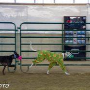 Romp & Roo Ancaster Fairgrounds