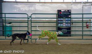 Romp & Roo Ancaster Fairgrounds @ Ancaster Fairgrounds